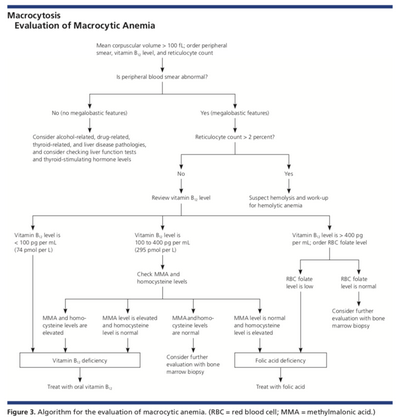 Causes and Treatments For Macrocystic Anemia